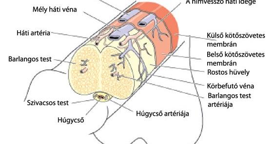 Merevedési zavar okai-kezelése-Dr. Szabó Ferenc