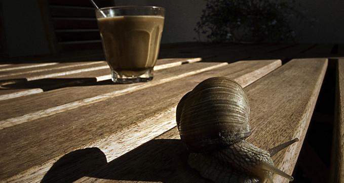 hogy a kávé hogyan befolyásolja az erekciót)