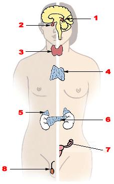 Minden, amit az erekcióról tudni kell | kovacsoltvas-kerites-korlat.hu
