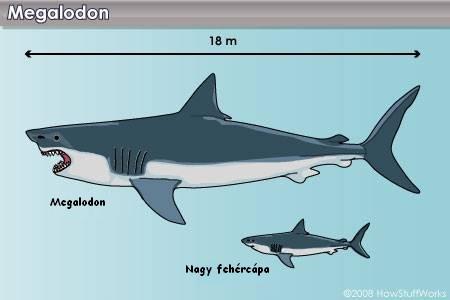 a gyilkos bálnának pénisze van
