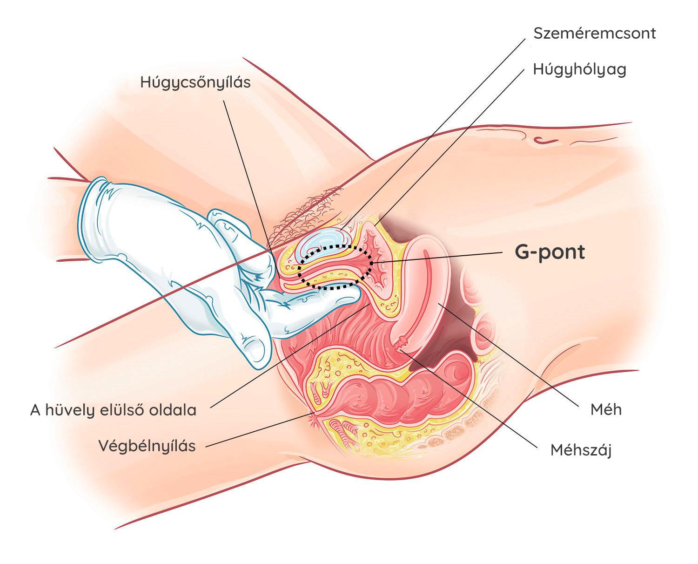 Hogyan lehet csökkenteni az erekciót egy férfiban