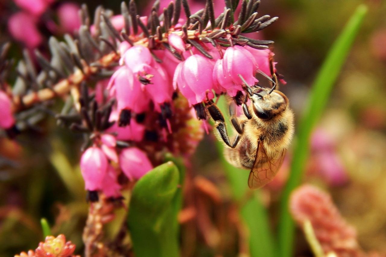 Méhek végveszélyben! Nem vicces. Nagyon nem. | Gardenista