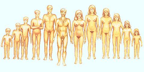 emlő női erekció