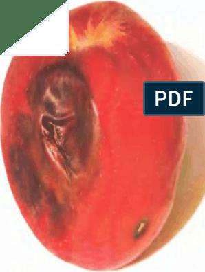 sovány és vastag pénisz)
