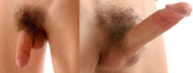 férfi hímvesszők merevedés nélkül