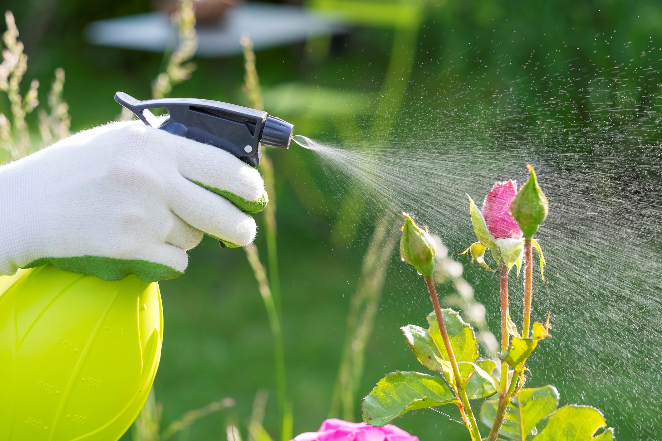 növények a hím erekciójához krém az erekcióhoz és a hatékonysághoz