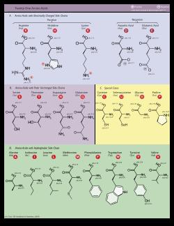 aminosavak az erekcióhoz