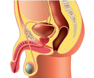 urethritis és merevedés)