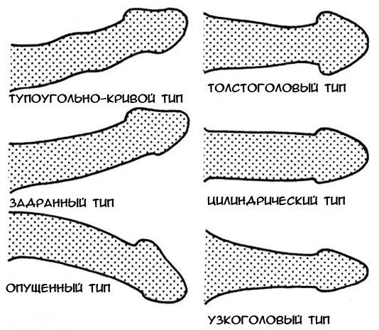 a pénisz helyes alakja az erekció során)