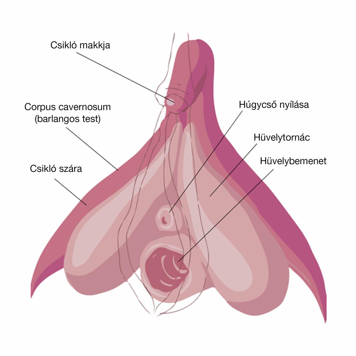 nincs erekció 25 év a pénisz rossz