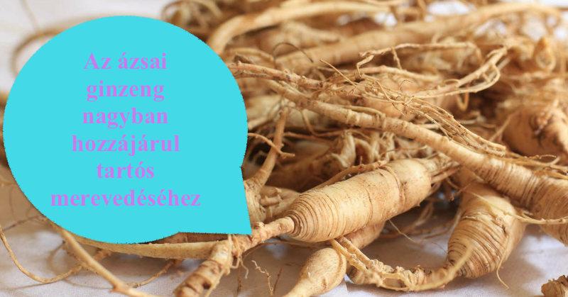 Ginseng: a legfőbb növény férfierő és immunrendszer erősítésére