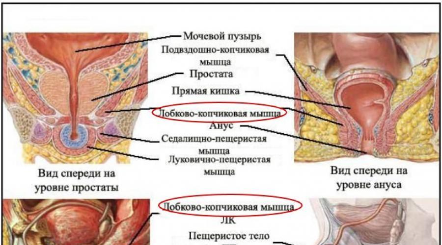 kegel gyakorlatok az erekció meghosszabbítására)