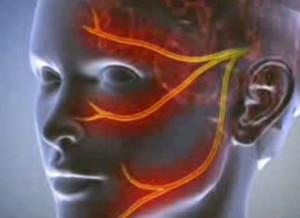 A férfi húgyivarrendszer szervei