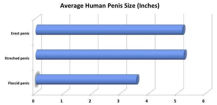 hogyan tekintik a pénisz normálisnak?