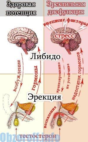 az erekciót befolyásoló pszichológiai tényezők